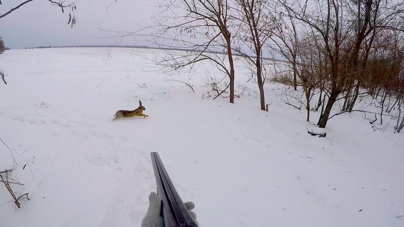 Охота на зайца 2018 Лучшие выходы Удивленные зайцы