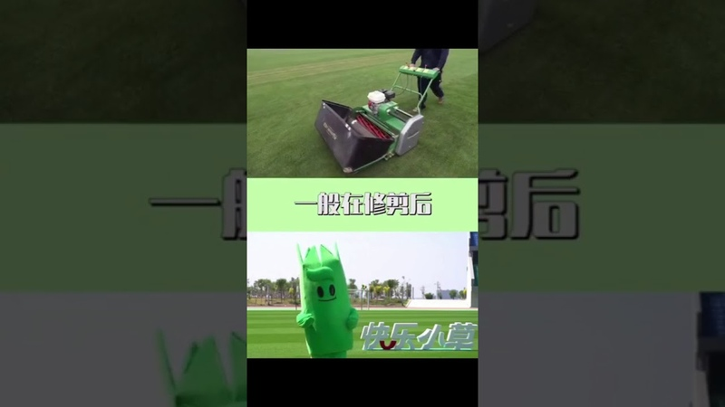 Do you know how to maintain the lawn of the football field