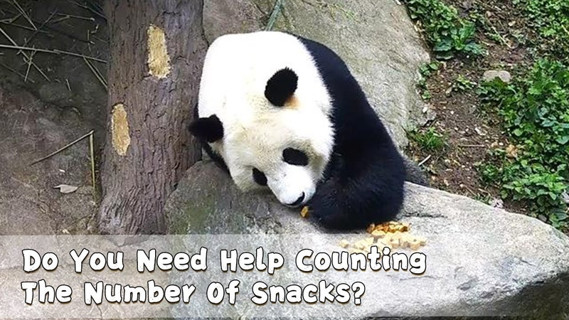Do You Need Help Counting The Number Of Snacks | iPanda