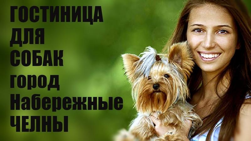 Гостиница для собак город Набережные Челны