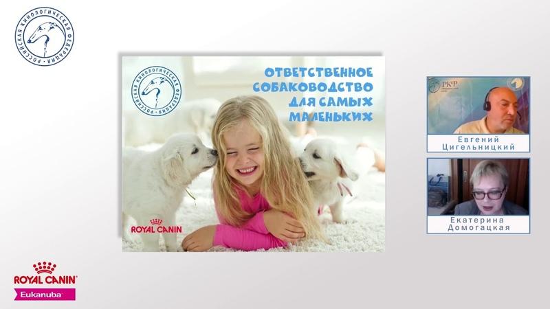 Часть 1. История одомашнивания собак | РКФ детям