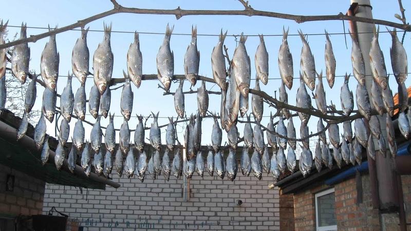 Вяленая рыба плотва деломастерабоится