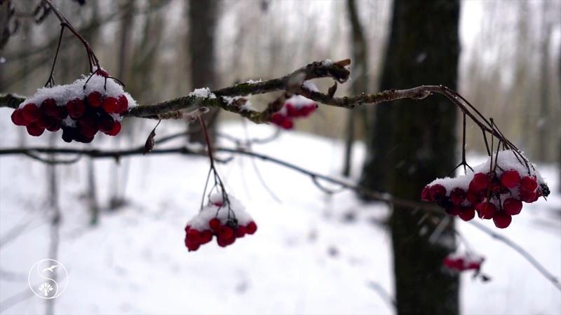 🌠 ЛЮБЛЮ СНЕЖНУЮ ЗИМУ ~ Зимняя Прогулка В Лесу ~ Музыка и Зимнее Настроение с падающим Снегом