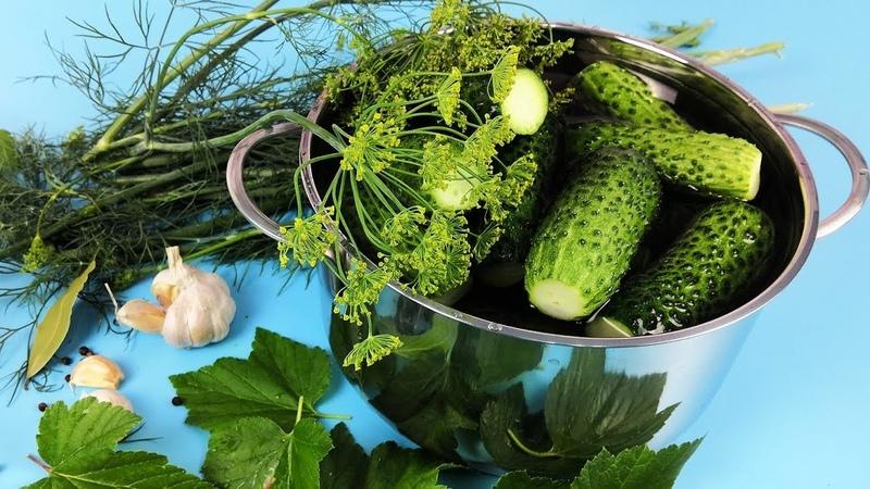 Малосольные Огурцы. Вкусные,Хрустящие. Бабушкин рецепт | Просто Кухня - Выпуск 74