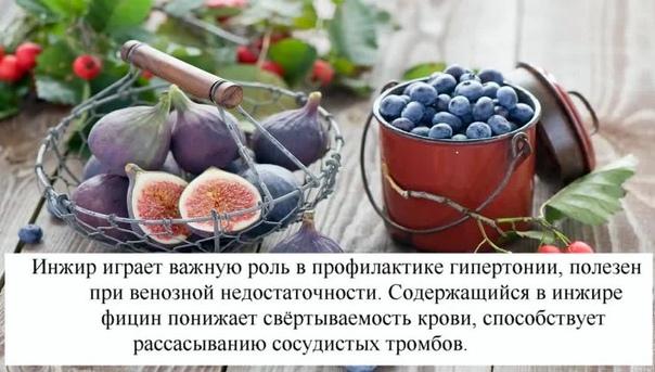 О ЛЕЧЕБНЫХ СВОЙСТВАХ ИНЖИРА Многие слышали название фрукта «инжир» и пробовали этот сладкий продукт. Размер у него не очень большой как некрупного яблока. Плоды произрастают на очень высоком