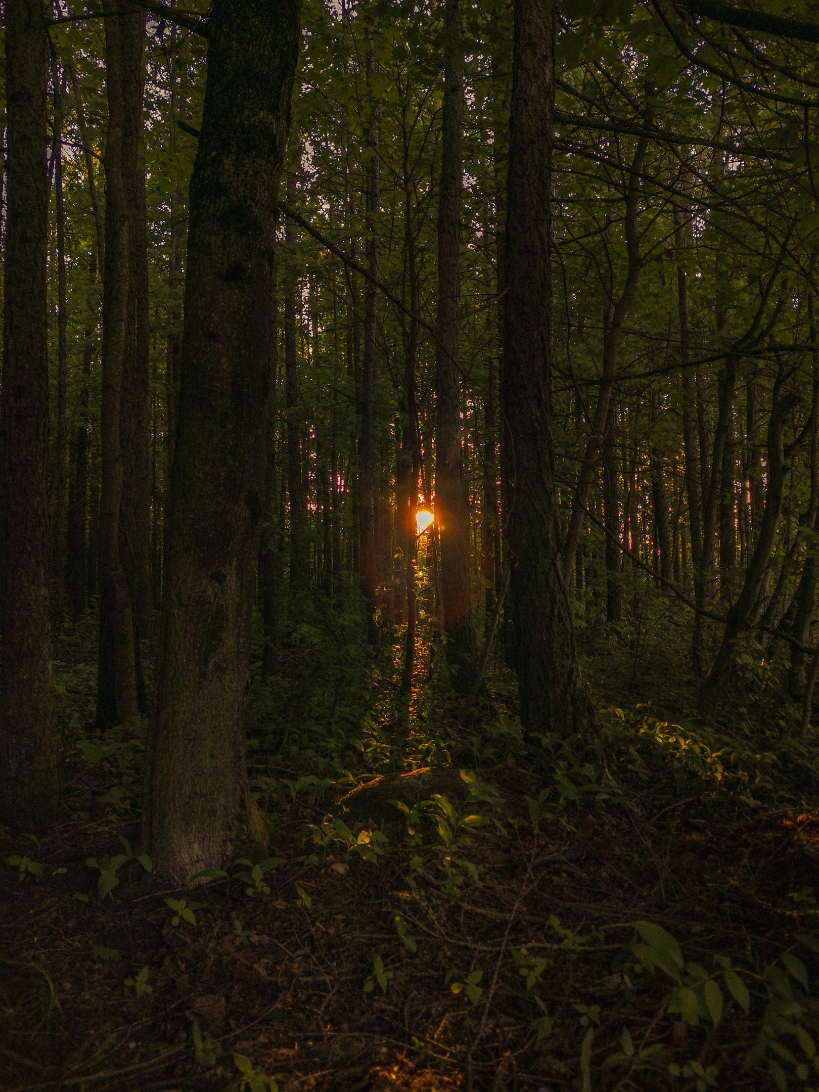 Гатчина - Фото
