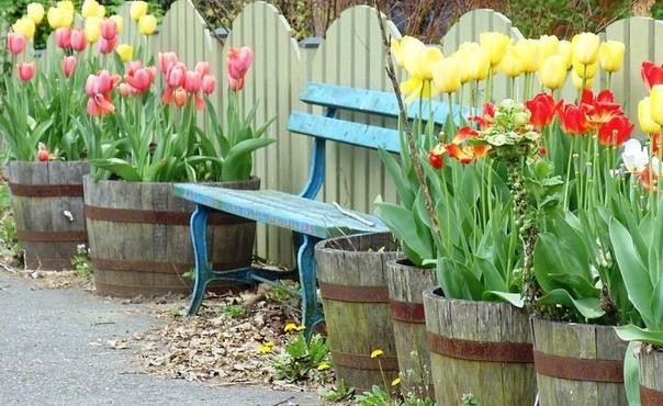 Яркие тюльпаны в деревянных уличных горшках вдоль забора!