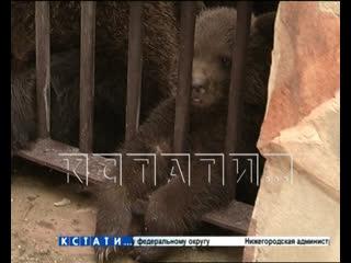 Тигры, медведи и макаки - новые нижегородцы родились в зоопарке