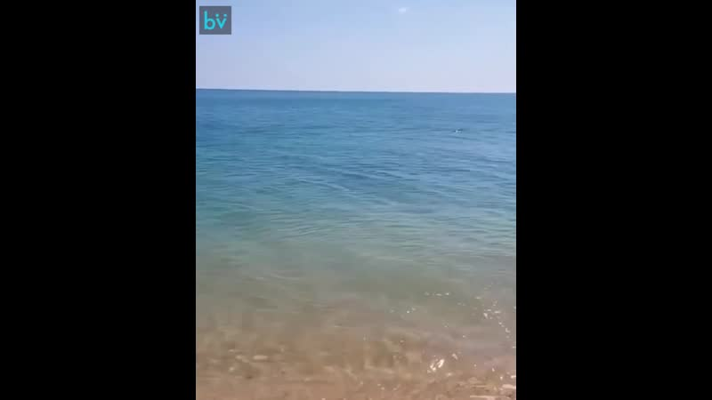 Природа настолько очистилась, что дельфины плещутся прям на берегу Черного моря.