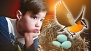 Удивительная находка (птенцы, гнездо, природа), что случилось?