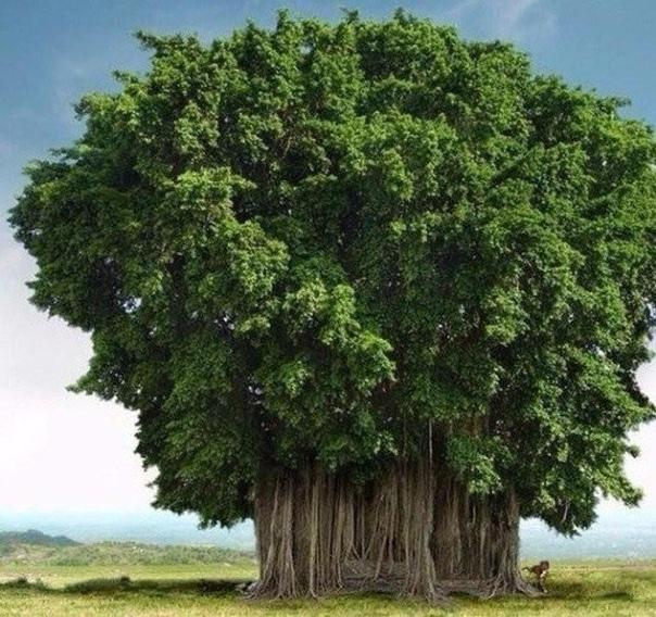 Причудливые деревья) (источник: gofazenda)