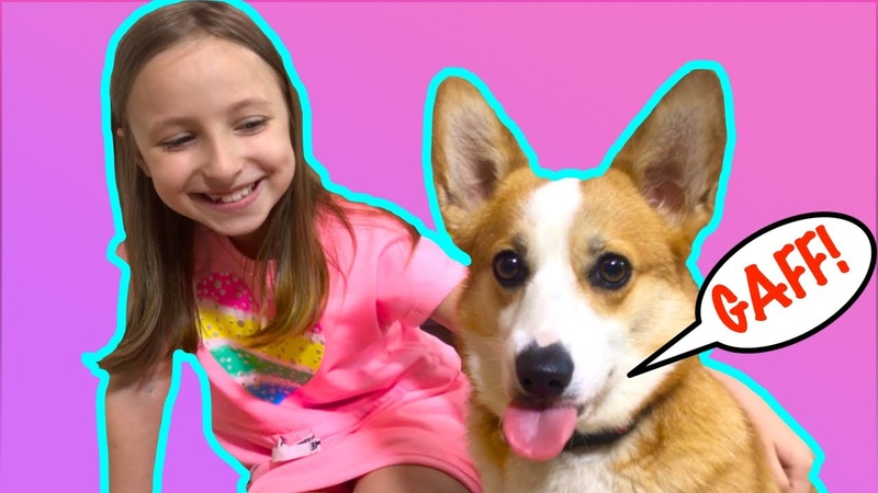Соня понимает язык своей собаки корги Перси. Видео для детей про лучший день в жизни одной собаки.