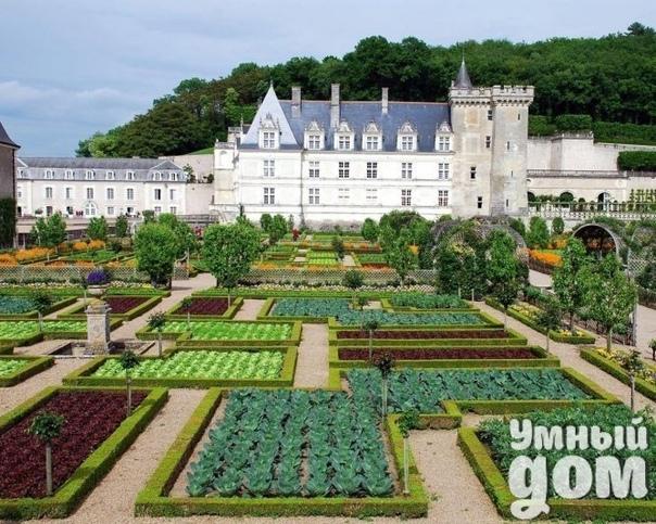 Декоративные огороды замка Вилландри во Франции. Потрясающе!