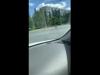 Бэмби бегает по городу / Тольятти
