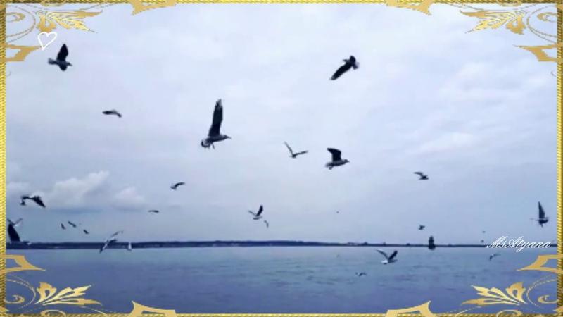 Ретро Владимир Трошин Голубка клип