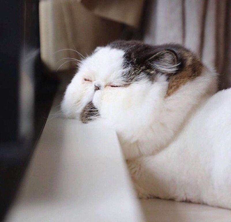 Текущее состояние:Сонный мякиш.