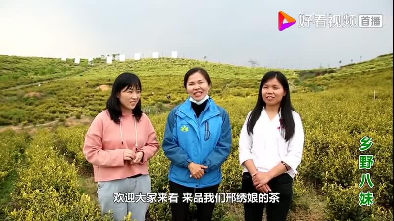 Огромная чайная плантация 茶山
