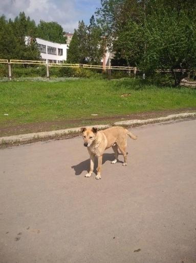 Бродячий пес чуть не загрыз маленькую девочку. Случай произошел в Макеевке. Как рассказала местная жительница, на ее дочь напала бродячая собака, из-за чего девочка получила несколько ран лица и