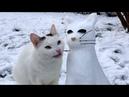 ПРИКОЛЫ С ЖИВОТНЫМИ 😺🐶 Смешные Животные Собаки Смешные Коты Приколы с котами Забавные Животные 83