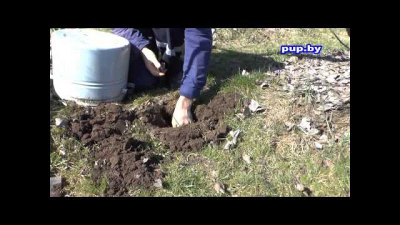 Как избавиться от кротов в саду на огороде How to get rid of moles in the garden and the garden смотреть онлайн без регистрации