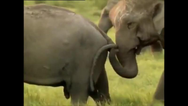 Секс в природе развязные животные отжигают. дикий мир. » Freewka.com - Смотреть онлайн в хорощем качестве