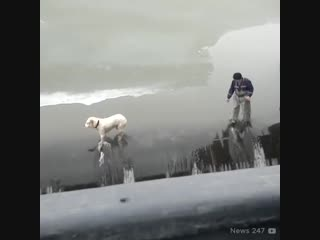 Женские Хитрости () спасение животных