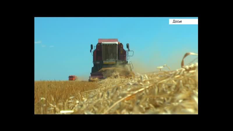 Объём экспорта сельхозпродукции Алтайского края к 2024 году планируют увеличить до $500 миллионов