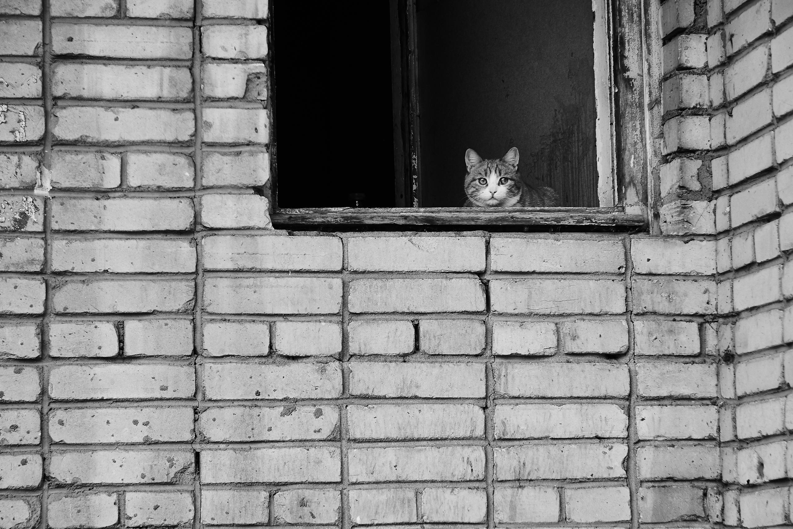 Котики ебеней - Фото