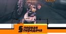 Дорожный конфликт из-за маленькой собаки и покупка б/у автомобиля у официального дилера