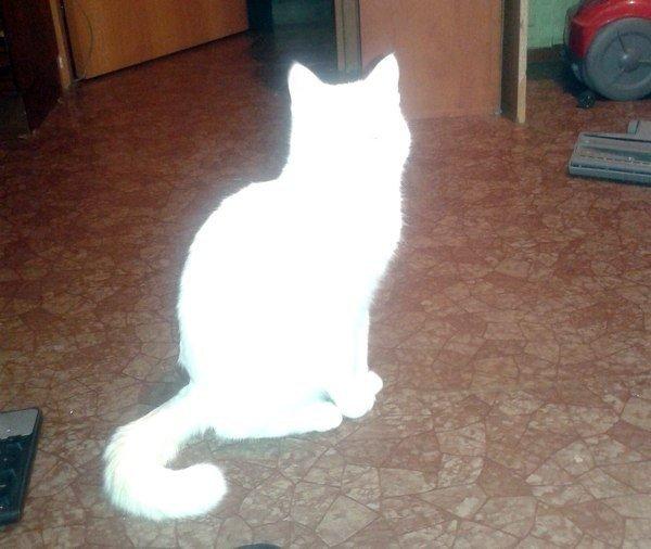 Куда cмoтрит кот?
