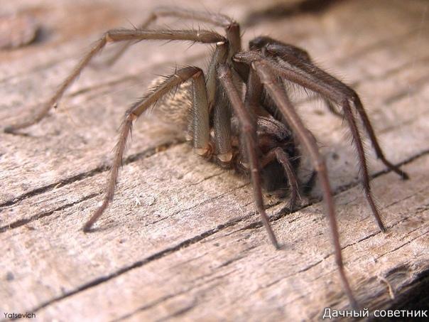 Как безопасно избавиться от пауков в доме