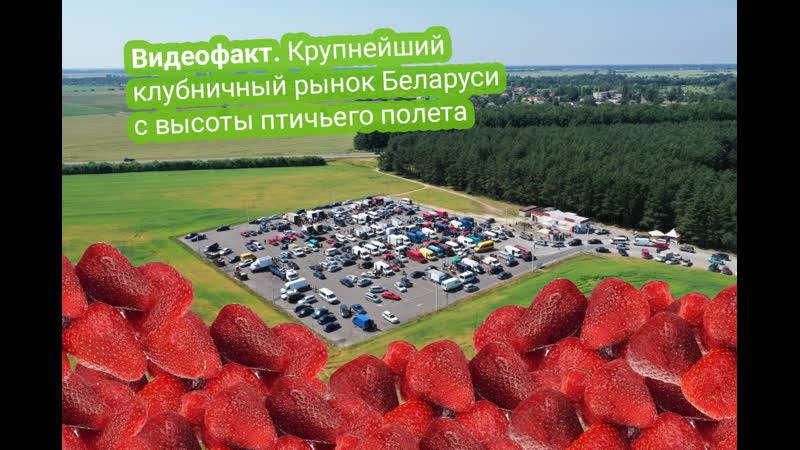 Как выглядит крупнейший клубничный рынок Беларуси с высоты птичьего полета(2)