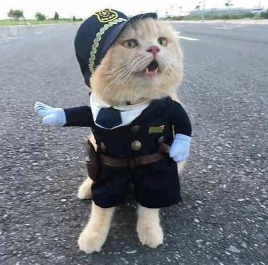 Выйдите из машины сэр!