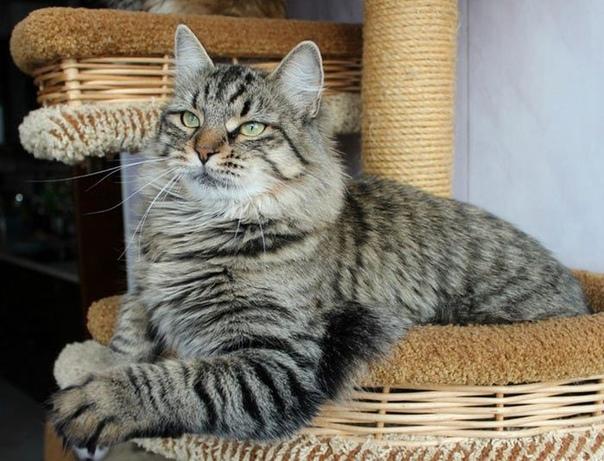 - Лизка Отцепись! Ай! крикнула Саша, когда Лизка, толстая трехцветная кошка, ни с того ни с сего принялась мурчать и жмякать руку острыми коготками. Гладь тебя еще, зараза. Лизка промолчала,