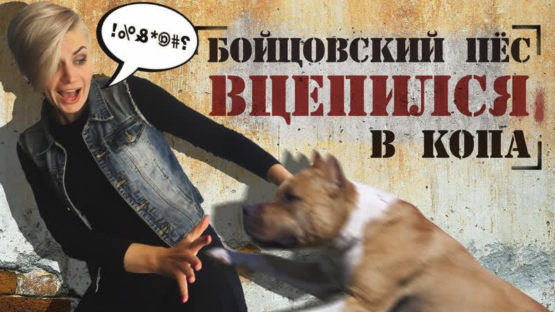 Атака стаффорда, 20 000 000 рублей алиментов и ограбление с одеялом. Отдел происшествий 25.06.2019. Невские новости