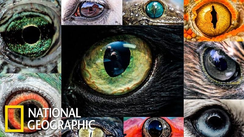 Мир глазами животных Документальный фильм про животных National Geographic