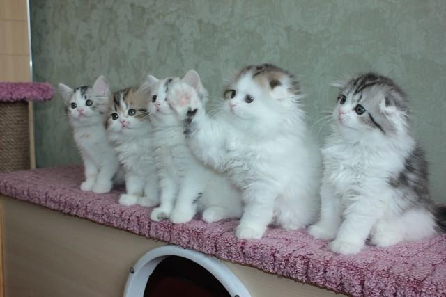 У кого живет несколько кошек?