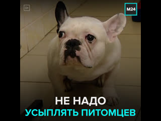 В Москве появилась гостиница для животных, владельцы которых болеют Covid-19  Москва 24