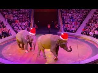 Слоны в Екатеринбургском цирке