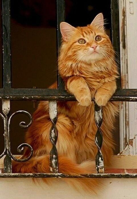 Джульетта ждёт Ромео!!!