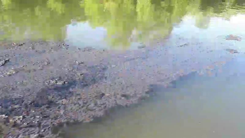 В Ворошнево по реке снова плывут нечистоты