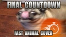 Europe Final Countdown Fast Animal Cover done within an hour