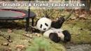 Trouble Is A Friend, Failure Is Fun | iPanda