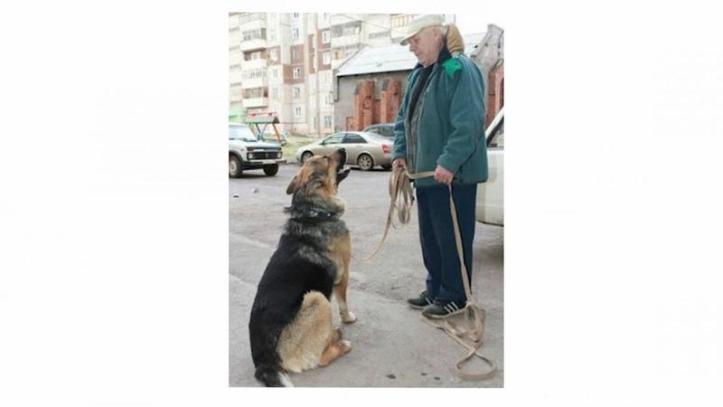 Врач увидел как по поликлинике бегает собака с запиской в зубах Написанное повергло его в шок