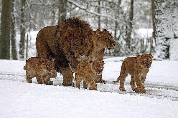 - Легко ли быть мамой