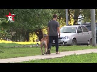 Житель Омской области жестоко убил собаку соседа