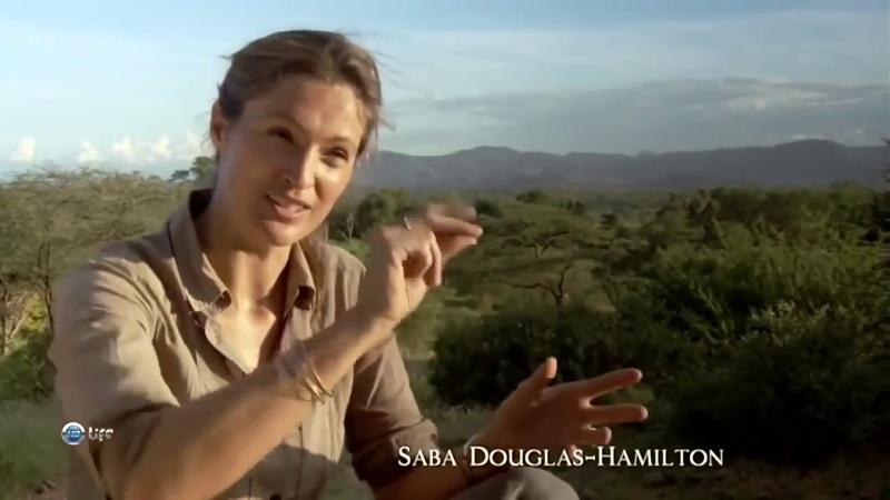 Дикая природа Слоны Африка Документальный фильм BBC