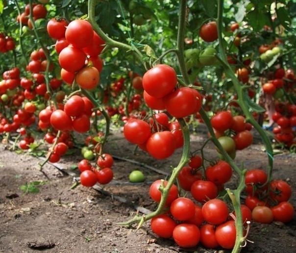 Как получить урожай, которым можно удивить всех