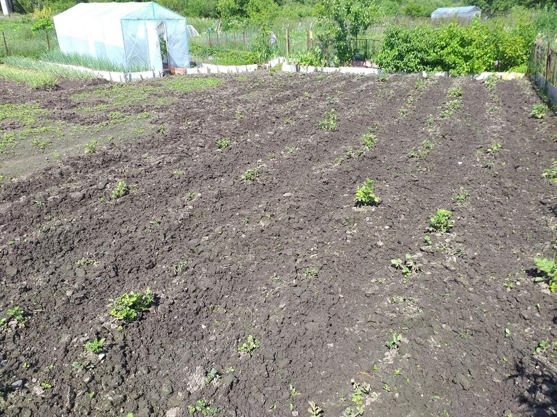 Затопленные огороды в этом году не дадут урожая