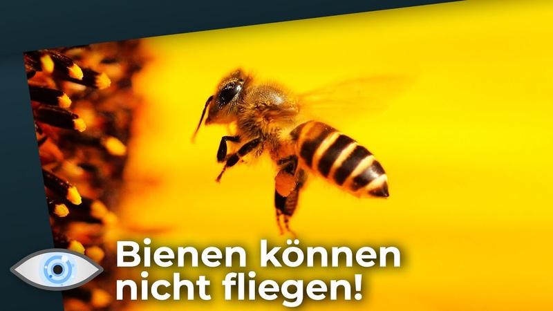 Bienen können nicht fliegen Du kannst das Geheimnis des Bienenflugs lüften